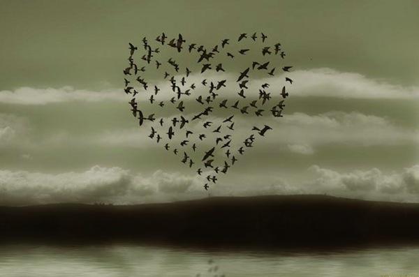 uccelli e cuore
